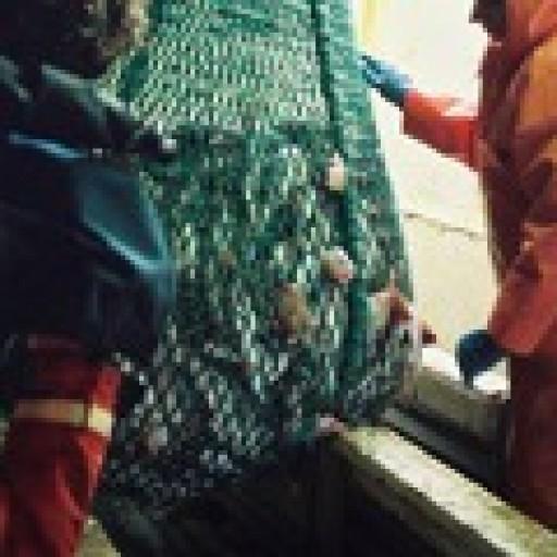 Rybołówstwo: nowe otwarcie