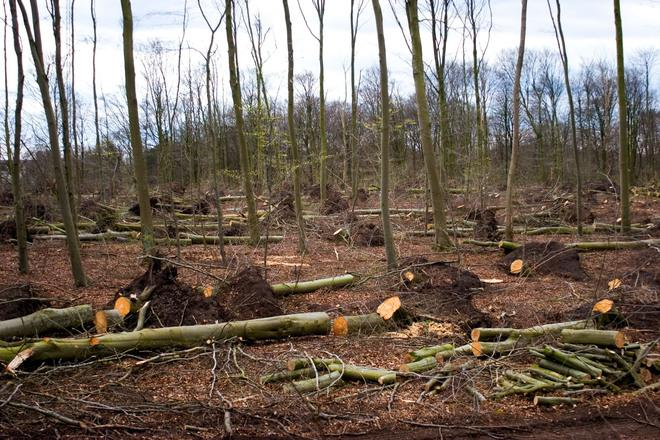 cutting-down-the-forest-1-1534121-1_660x440