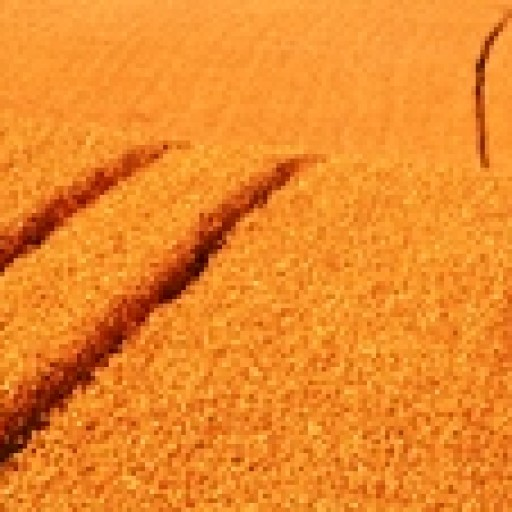 Przyszłość żywności i rolnictwa