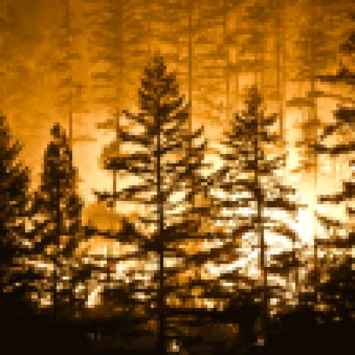 Lasy płoną coraz dłużej