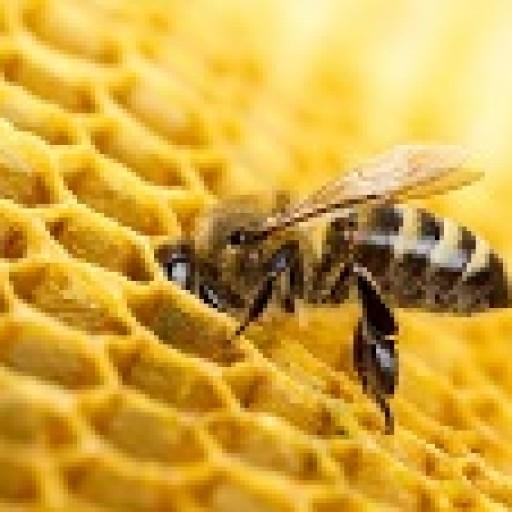 Europejska inicjatywa obywatelska na rzecz pszczół