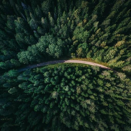 Działania KE na rzecz ochrony światowych lasów